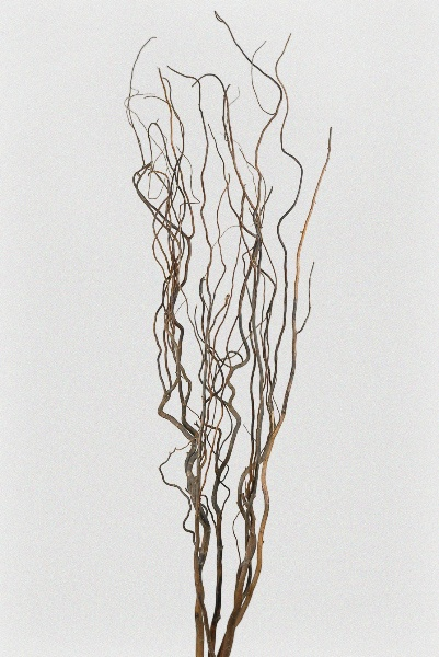 Save on Crafts- willow branches- 6 branches, 5 foot- $9