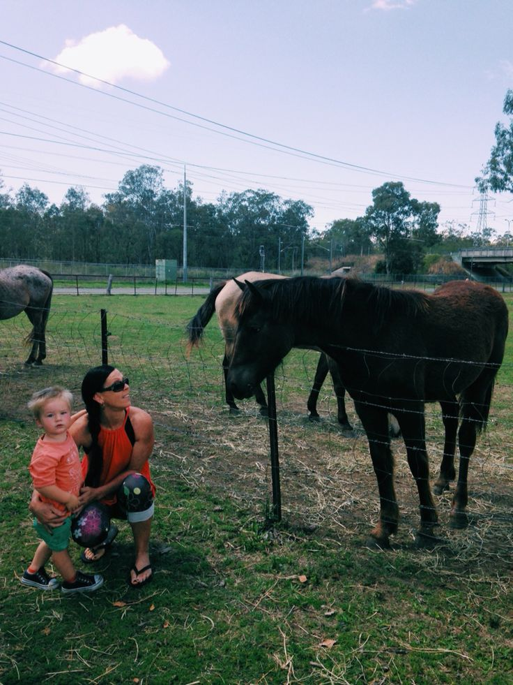 Neighbours horse