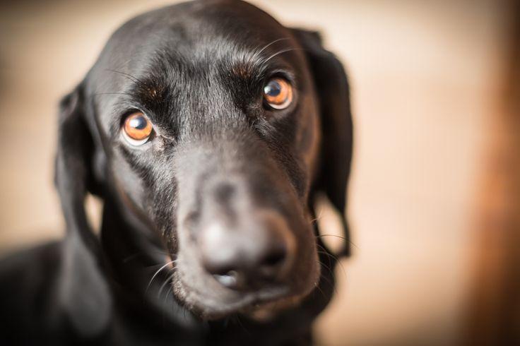 This lovely eyes :) #dogphoto #dogphotography #dogphotographer #topdogphoto #animalphotography #ilovemydog