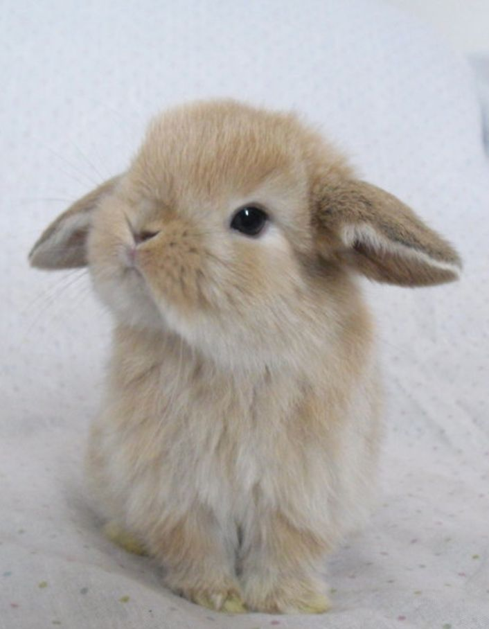 Getting a bunny!!!                                                                                                                                                                                 More