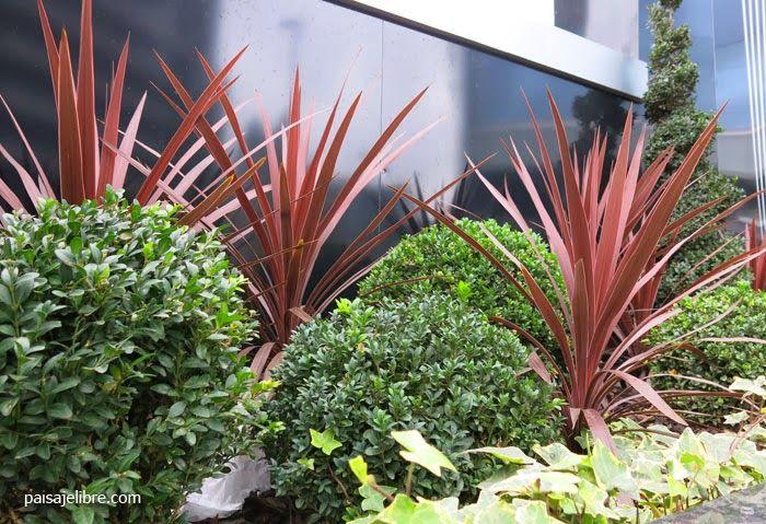 Paisaje libre composiciones de plantas para jardineras en - Jardineras con plantas ...