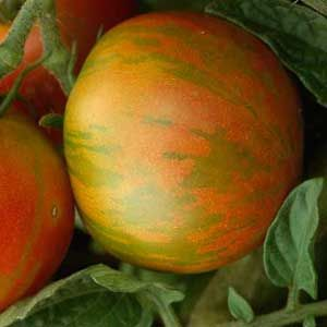 Your Guide to Planting Tomatoes  http://www.rodalesorganiclife.com/garden/your-guide-planting-tomatoes?cid=OB-_-ROL-_-MAF