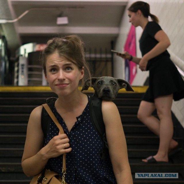 Нью-Йоркское метро запретило возить собак, если они не помещаются в сумки.