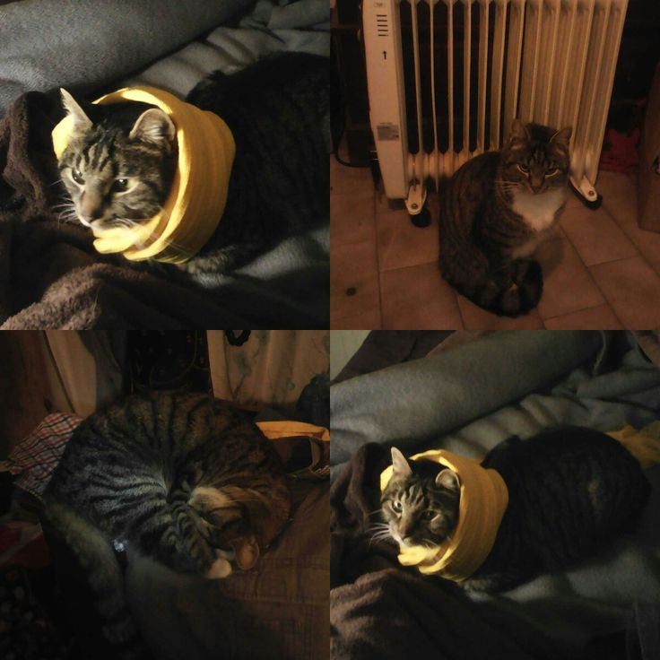 #winteriscoming #catsofpinterest #cat #jakkalsiekat