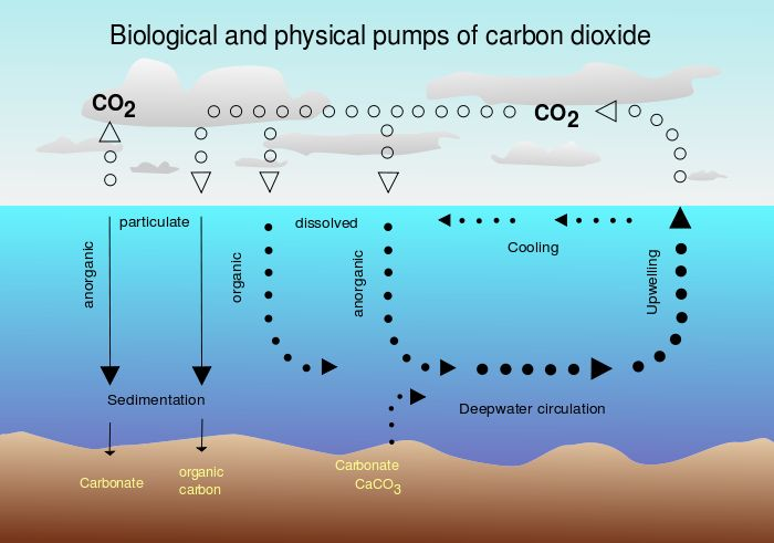 Carbon sink - Wikipedia, the free encyclopedia