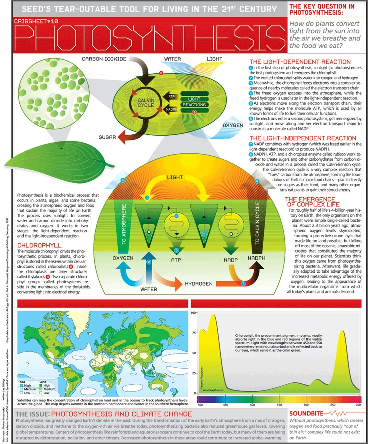 62 best 9th Grade Biology Review images on Pinterest ...
