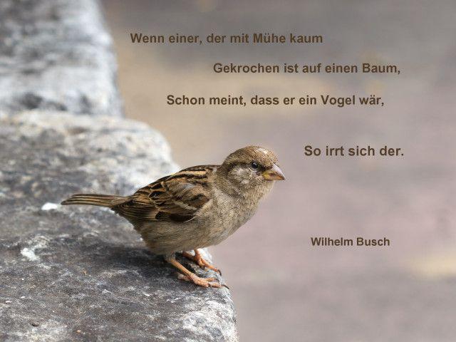 Wenn einer, der mit Mühe kaum, Gekrochen ist auf einen Baum, schon meint dass er ein Vogel wär, so irrt sich der. Wilhelm #Busch #Selbstüberschätzung #zitat #quote #printable