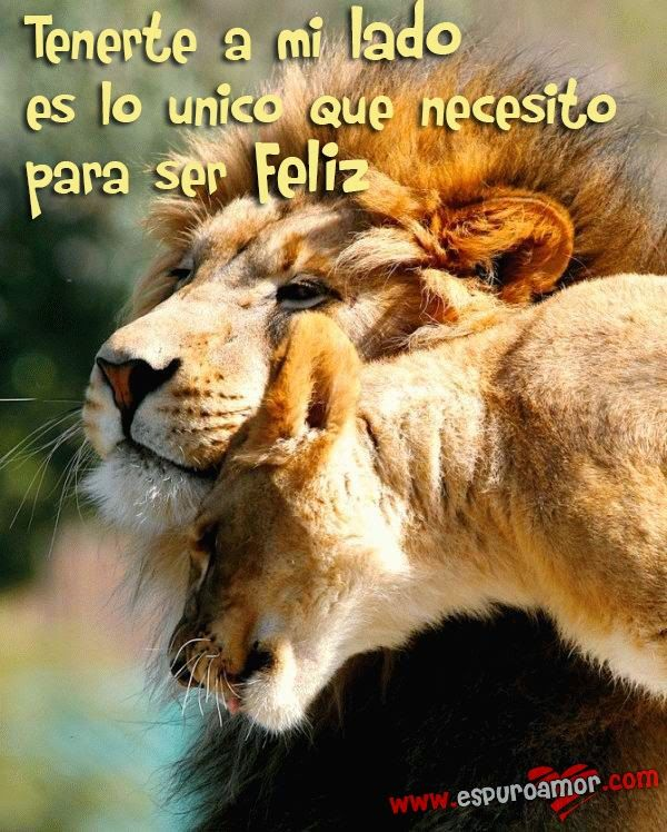 Frase de amor para dedicar con imagen de pareja de leones - http://espuroamor.com/2014/04/frase-de-amor-para-dedicar-con-imagen-de-pareja-de-leones.html #Imagenesconanimales, #Imagenesdeamor, #Imagenesdeparejas