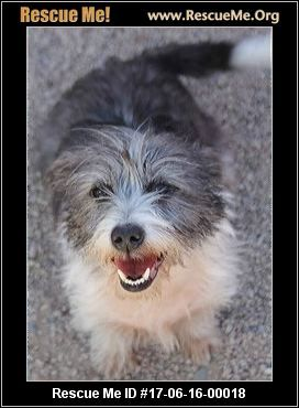 - Arizona Small Dog Rescue - Phoenix, AZ Rescue Animals