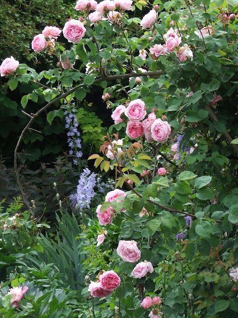 Garden, dreaming of spring