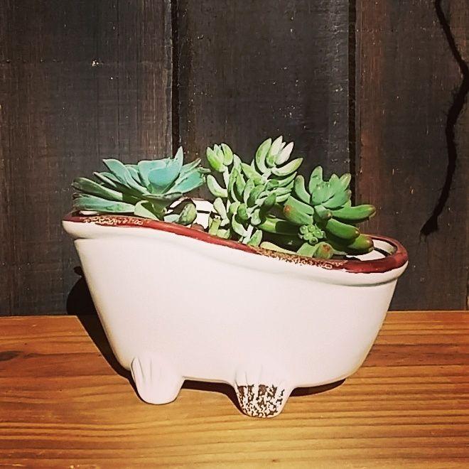Pondríamos suculentas en todos lados! #tiendaverdeamor #rinconverde #sucuamor #succulentseverywhere