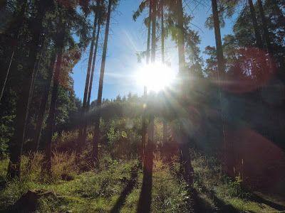 CZ DATA: Lesácká polka. Náš pan lesní dceru má děvčátko jak...
