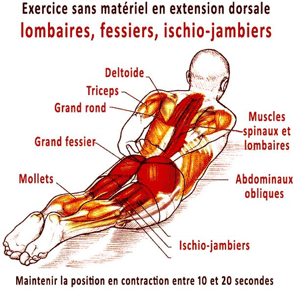 exercice pour le #dos sans materiel en extension dorsale #muscu #pdc