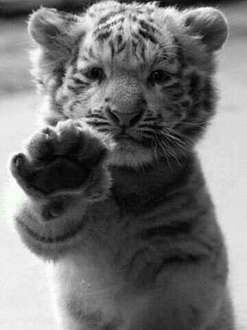 So much cuteness !