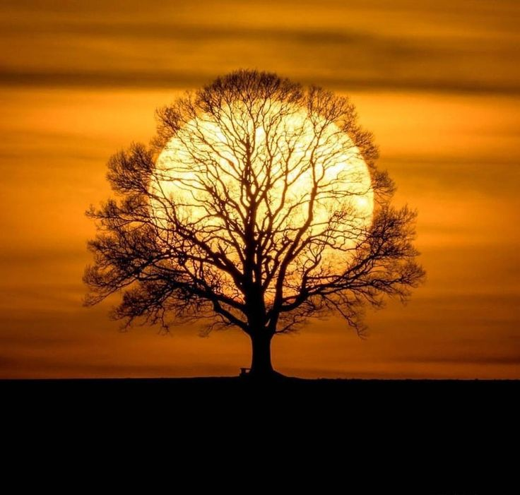 The sun tree: pics