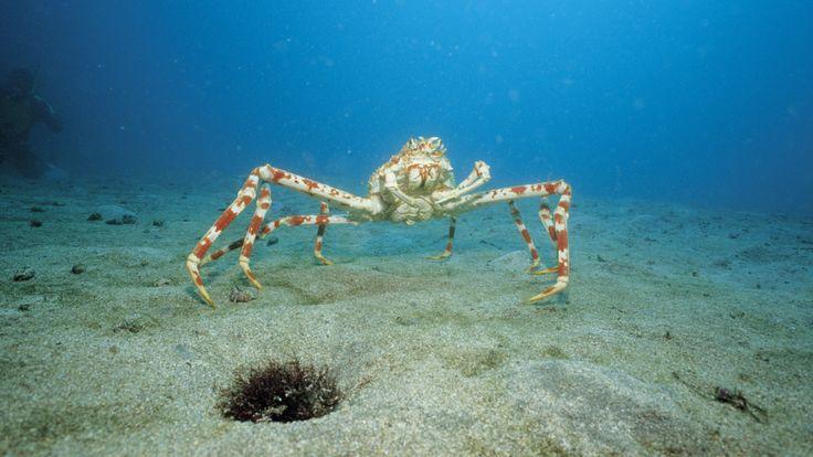 animals_amazing_high_definition_quality_ocean_life-12.jpg 1,920×1,080 pixels