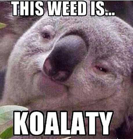 This Weed is Koalaty These are some cool Funny #Marijuana Pins but #OMG check this out #Marijuana  www.budhubinc.com https://www.facebook.com/BudHubInc (Like OurPage)