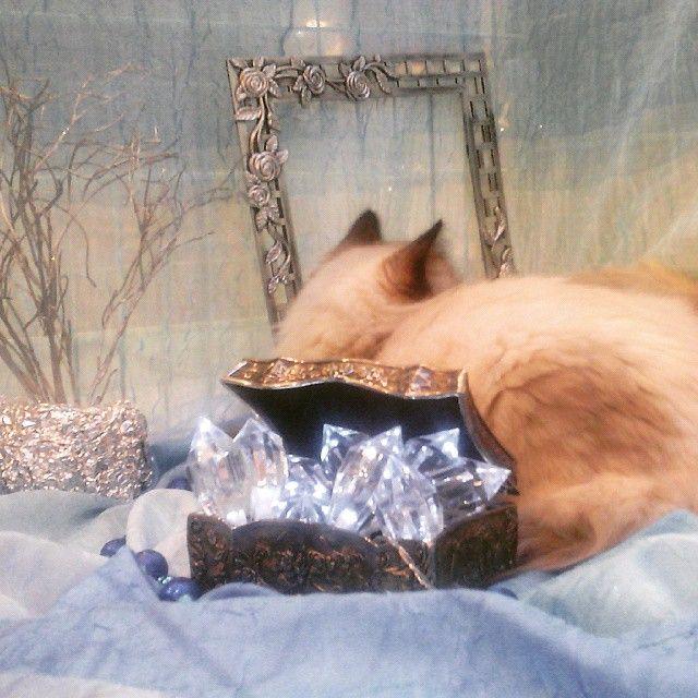 Cats / Niebo dla kotów. #catstagram #luxury #kitty #cat #cute
