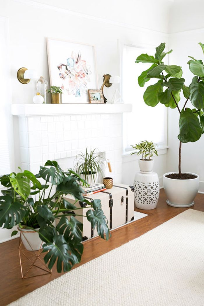 We asked Greg Salmeri, co-founder of Rolling Greens Nursery, all about proper plant care. Ahead he shares the best houseplants for any kind of light.
