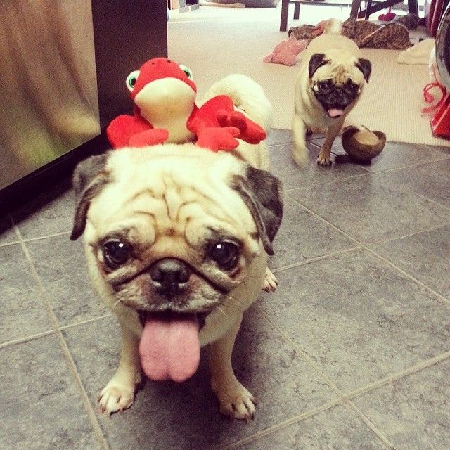 """""""Come on Rosy! Drop monkey butt and come play frogger with me!"""" (SR)"""