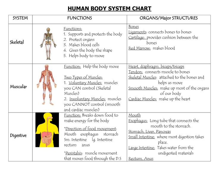 Systems Of The Body | HUMAN BODY SYSTEM CHART | For ...