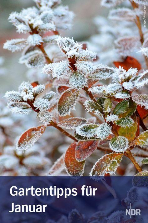 Gartentipps Fur Januar Garten Tipps Garten Garten Ideen Und