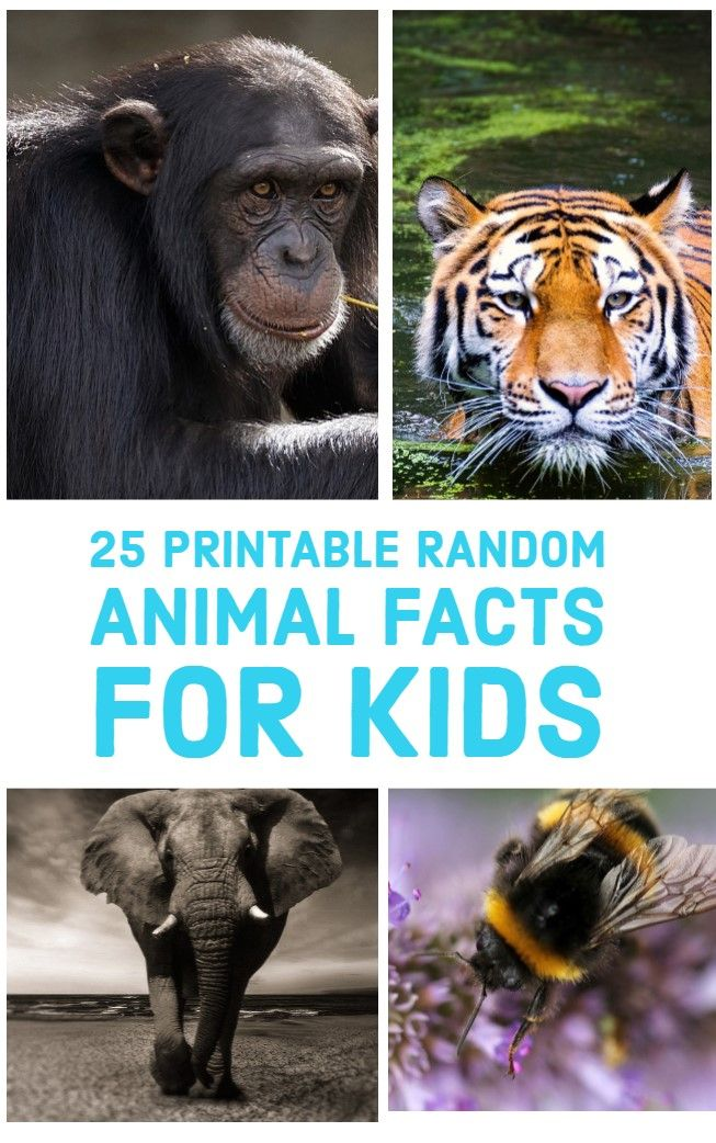 25 Random Animal Facts For Kids Animal Facts For Kids Funny
