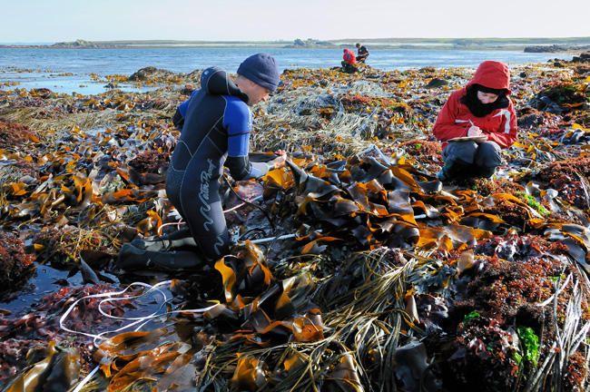 Les 150 meilleures images du tableau seaweed go mon 2 for Agence paysage bretagne