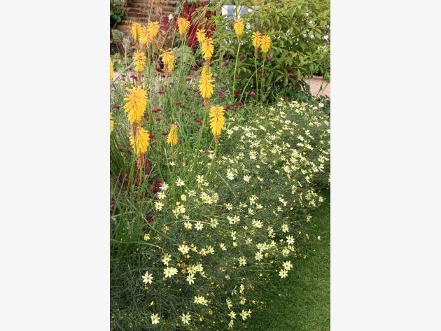 Gestaltungstipps für ein sonniges Blumenbeet