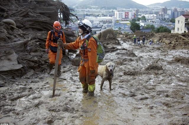 新月さんはTwitterを使っています 有り難う❗救助犬たち❗有り難う❗(泣) http://t.co/qOIrNAco2K