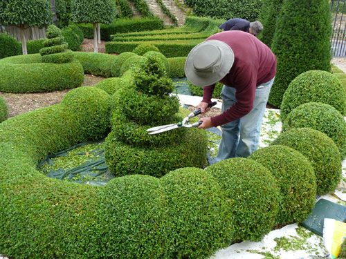 topiary at Bourton House in village of Bourton-on-the-Hill, Cotswold, UK; Jacobean house by eminent lawyer, Sir Nicholas Overbury in 1598; many owners, but last private owners 1983 by Richard & Monique Paice; sold last in 2010 as owners made Gardens public ; ) thanks to gardeners Paul Nicholls & Jacky Rae; HHA/Christie's Garden Of The Year 2006 award; 3 acre garden, 7 acre walled pasture; pictured: Paul Nicholls Clipping Parterre