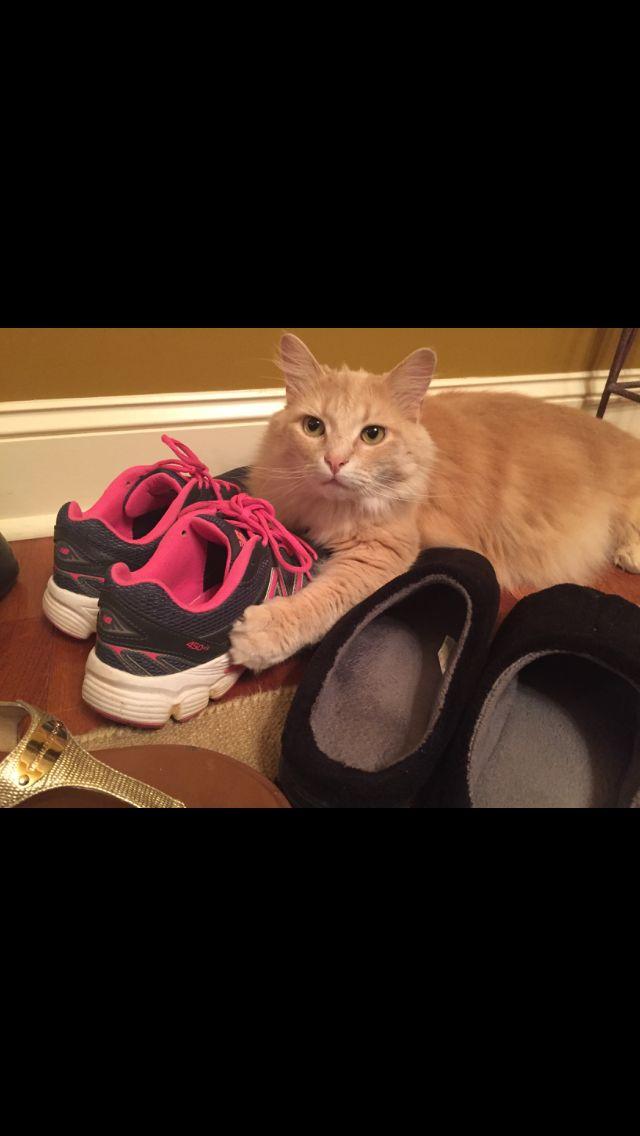 Caesar...the shoe lover