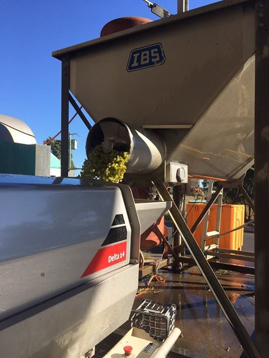 The 2015 Chenin Blanc being processed which is the last of the whites! Bring on the reds - stay tuned!