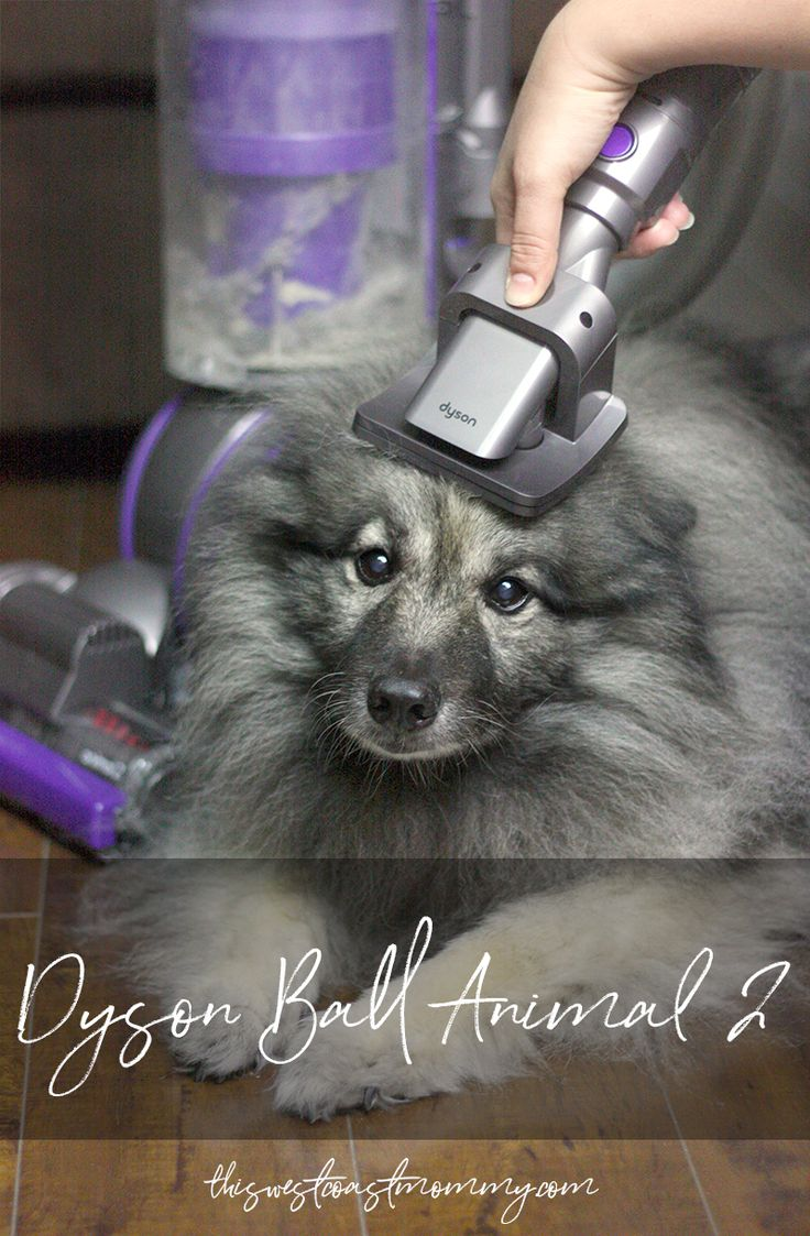 After just one use, I was impressed with the powerful suction and all the accessories that come with the Dyson Ball Animal 2.