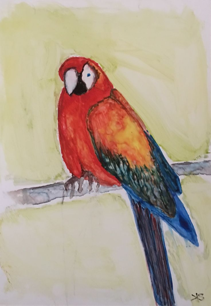 Parrot by Kylie Sichler (water colour on yupo)