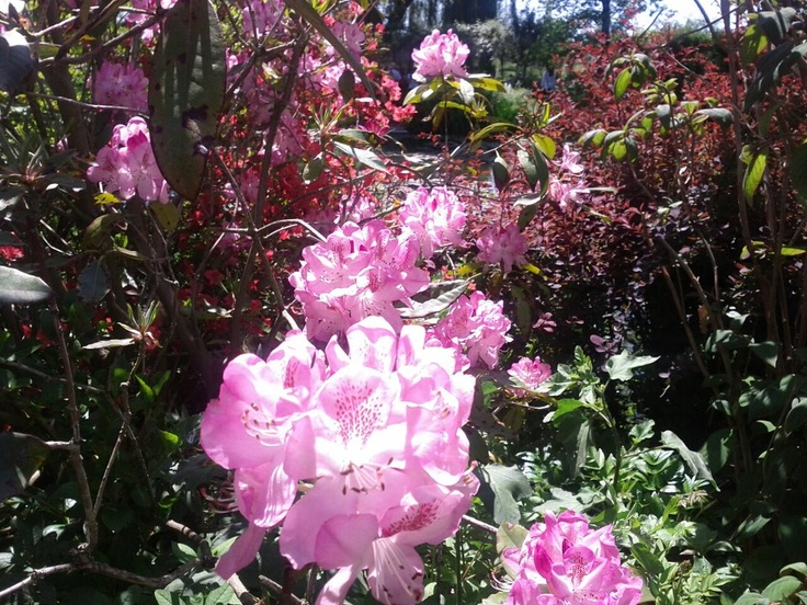Monet criou camadas de flores de diferentes cores e tamanhos.