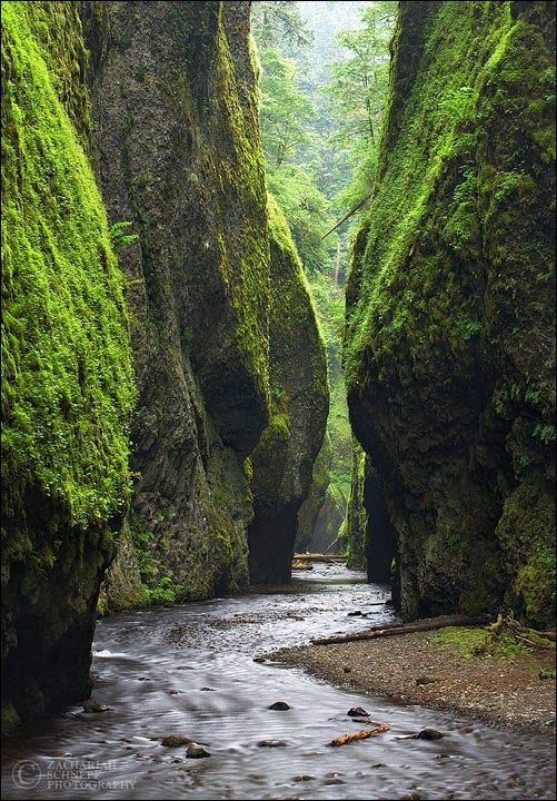 Fern canyon in the California Redwoods