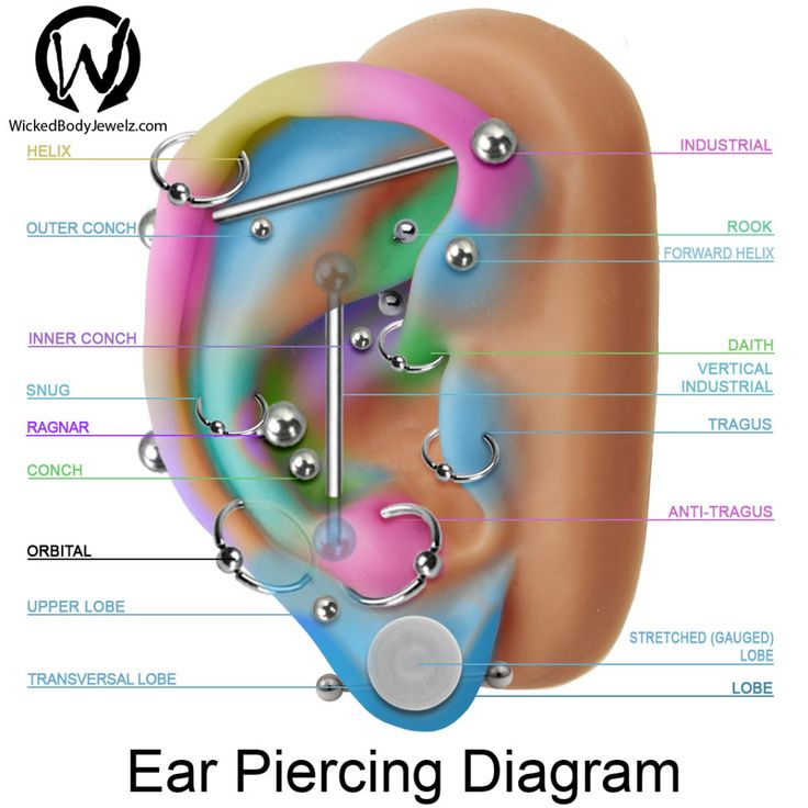 tragus, antitragus, conch, inner, upper, outer, daith, forward, helix, industrial, lobe, orbital, ragnar, rook, snug, stretched, transversal, vertical