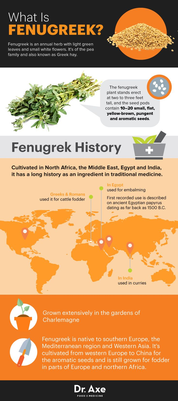 Fenugreek history - Dr. Axe http://www.draxe.com #health #holistic #natural