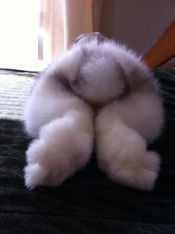 Bunny Bum, oooooh myyyyyy wooooord!! :|