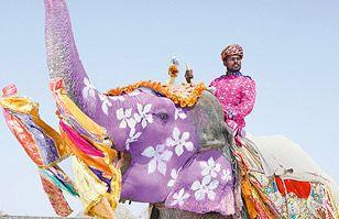Desfile de elefantes pintados: las mejores fotos del Festival del Elefante de India | Cultura India