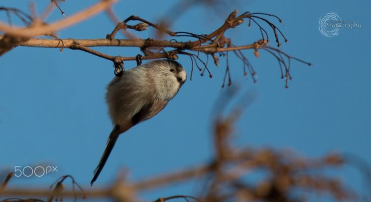 Tiny little Bird - Tiny little Bird on bright sunny cold morning in London