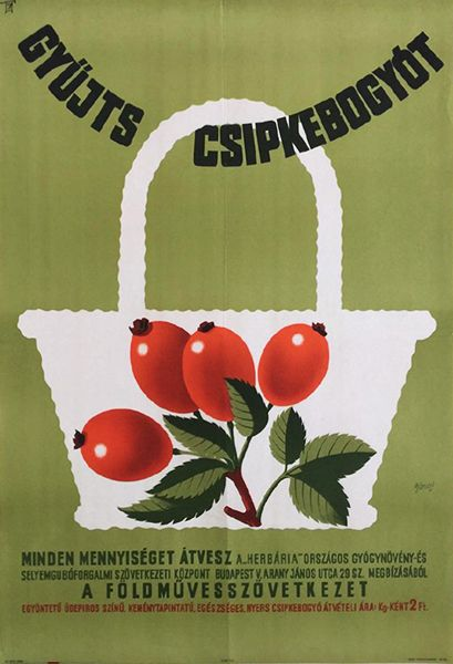 Gönczi Gebhardt Tibor - Collect rosehips 1965 original Hungarian propaganda poster