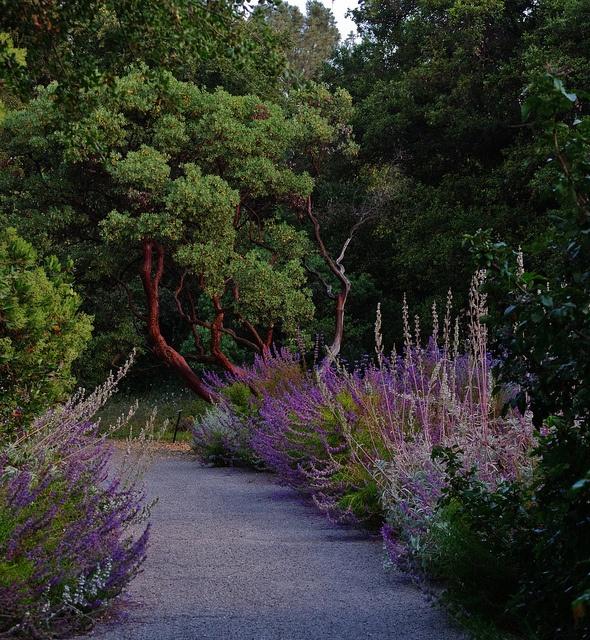 Incroyable Claremont Botanical Gardens, Claremont, CA