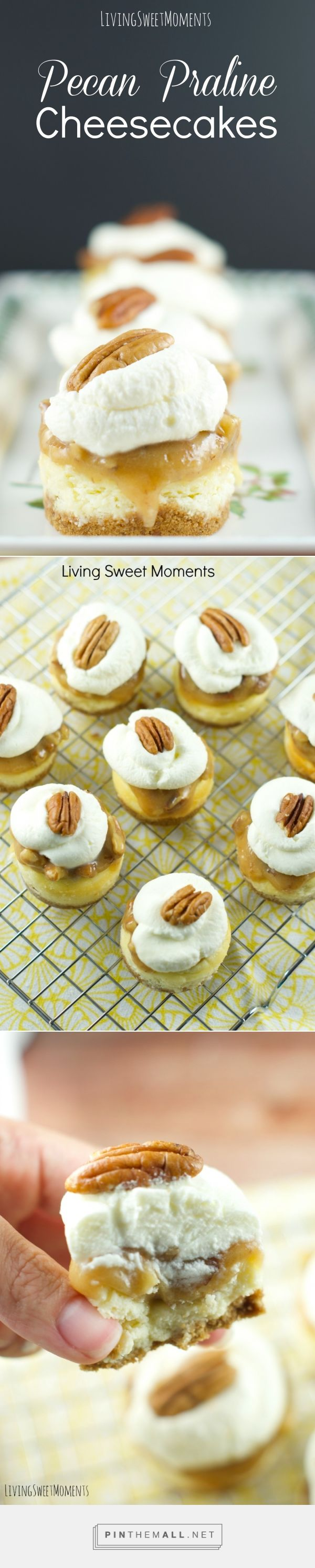 Pecan Praline Mini Cheesecakes - this is the best cheesecake recipe ever! these vanilla cheesecake bites are topped with pecan praline and chantilly cream