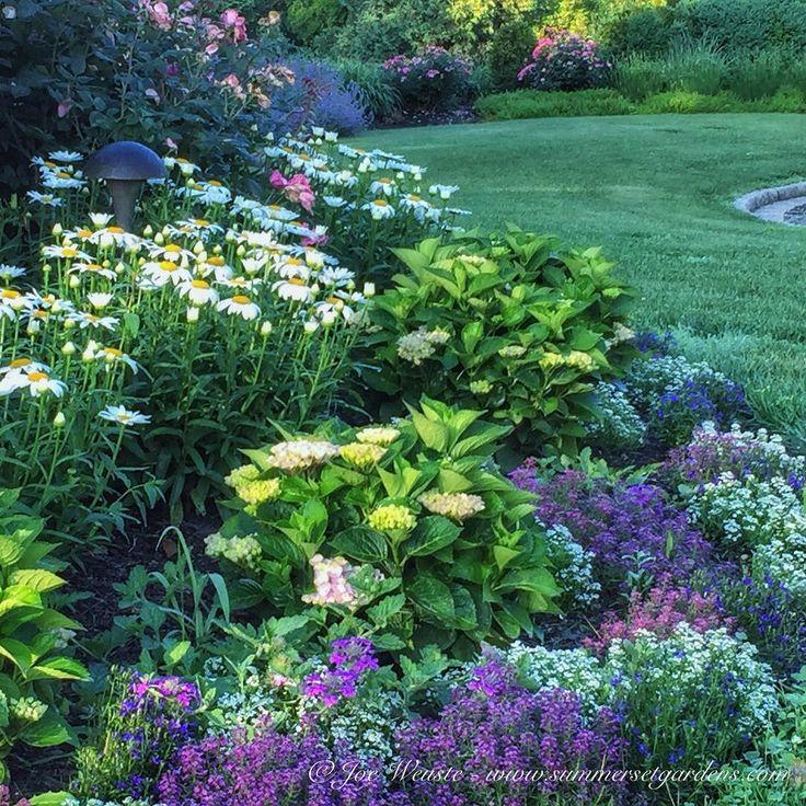 "Joe from Summerset Gardens on Instagram ""flowergarden"