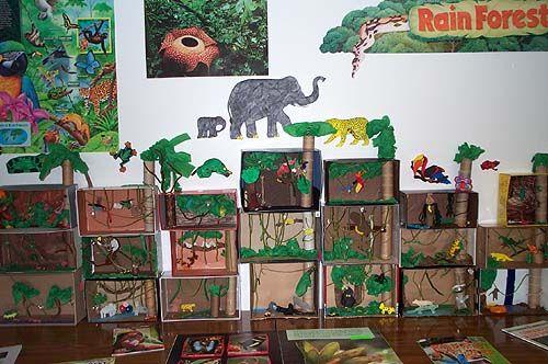 Rain Forest Dioramas