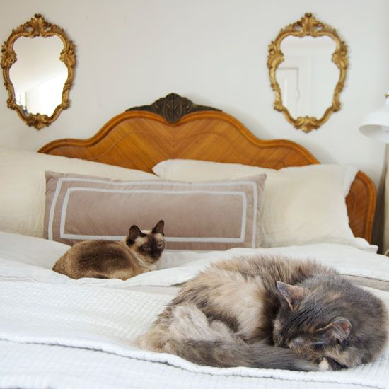 Getting Rid Of Cat Pee Smell | The Art Of Doing Stuff
