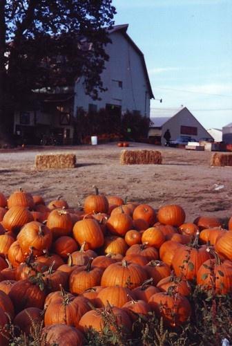 Harvest time on Sauvie Island, Oregon