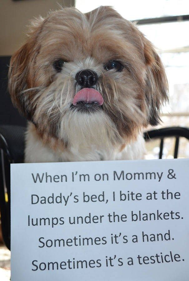 35 Pets Who Were Shamed For Their Hilarious Failures